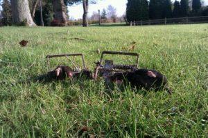 mole pest control